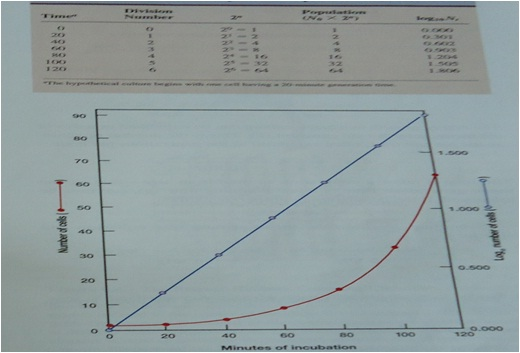 Pertumbuhan mikroba kinetika perhitungan populasi kultur sel mikrobia yang membelah setiap 20 menit b grafik penggandaan sel mikrobia garis merah dalam skala aritmetik dan garis biru dalam skala logaritmik ccuart Gallery