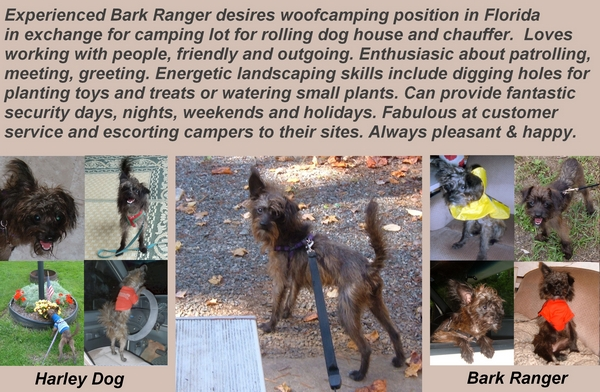 Experienced Bark Ranger seeking woofcamping or workamping by Dear Miss Mermaid