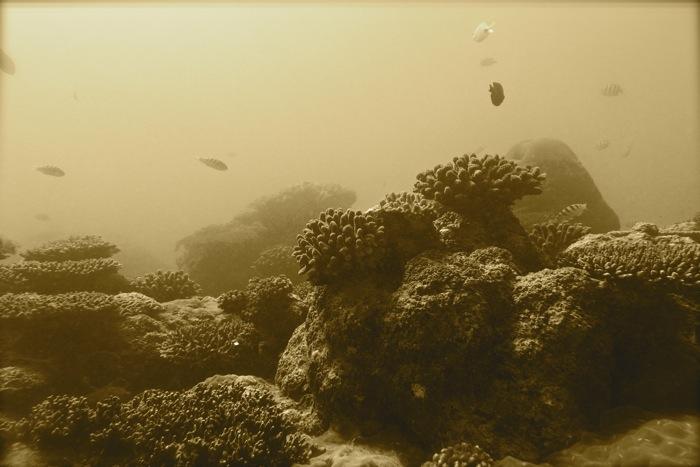 Amy Dingler - Bay of Ranobe, Madagascar
