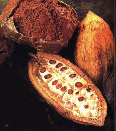 owoc+kakaowca.jpg