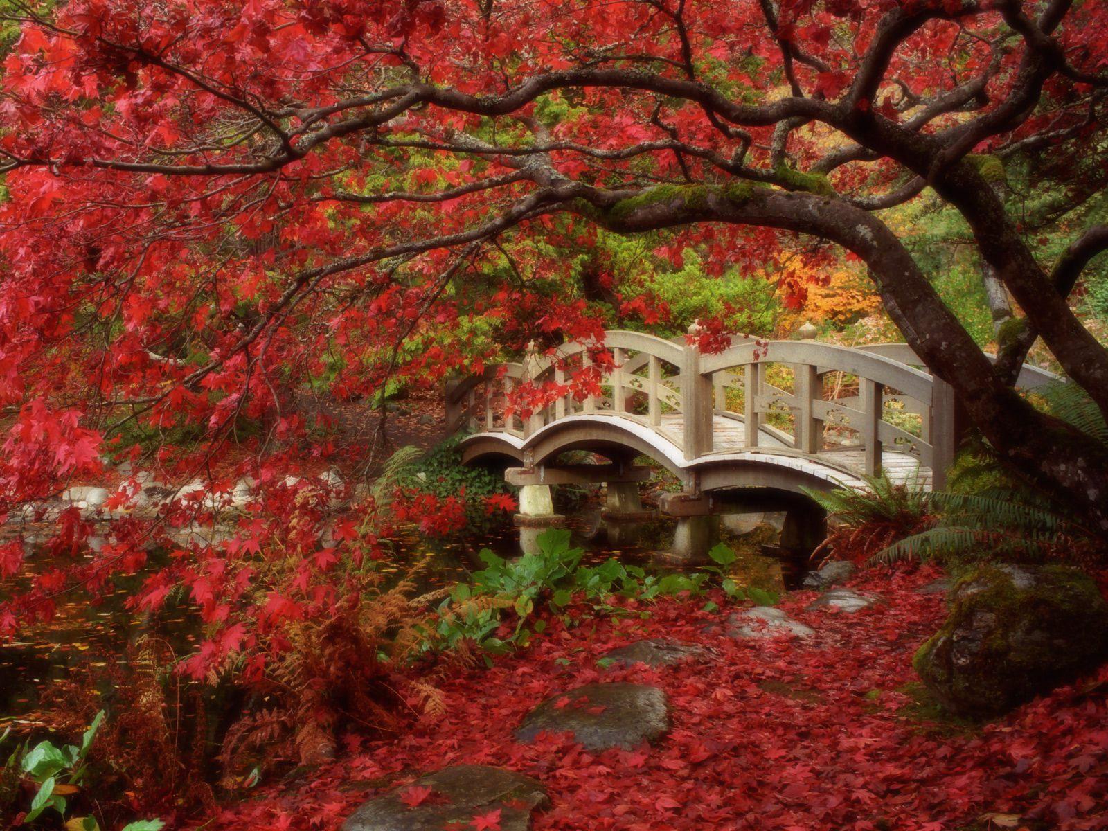 http://2.bp.blogspot.com/-tF5U6sAEY7A/TxRlFsuaixI/AAAAAAAAAUs/VSVfEa2BUls/s1600/Japanese+wallpaper_japanese-garden-british-columbia-HD_wallpapers.jpg