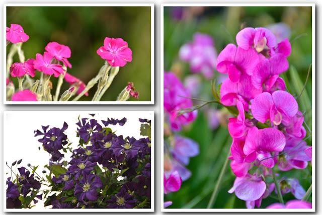 Victoria Tourist - Esquimalt Flowers