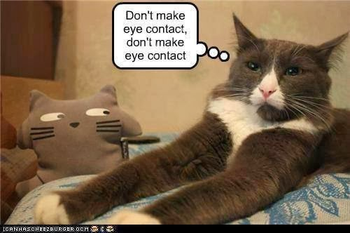 Funny Cats Count Blessings