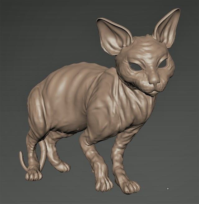 cat+12.jpg