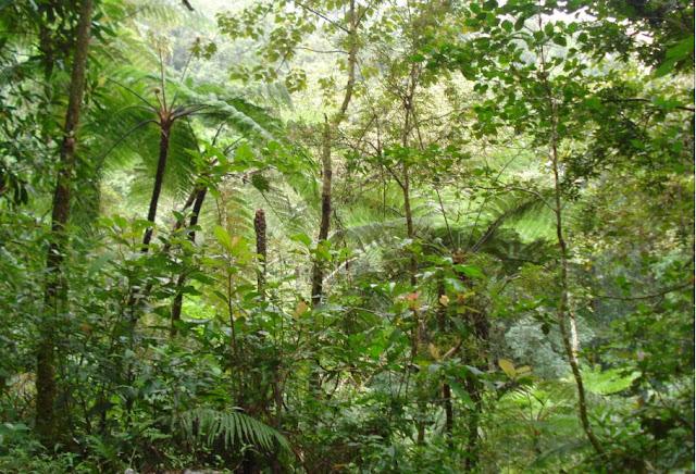 http://2.bp.blogspot.com/-tGDD6r5hox0/TZMwVYuOFiI/AAAAAAAABjo/994NZKTRhXk/s1600/tumbuhan.jpg