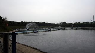 ヘラブナ 三和新池
