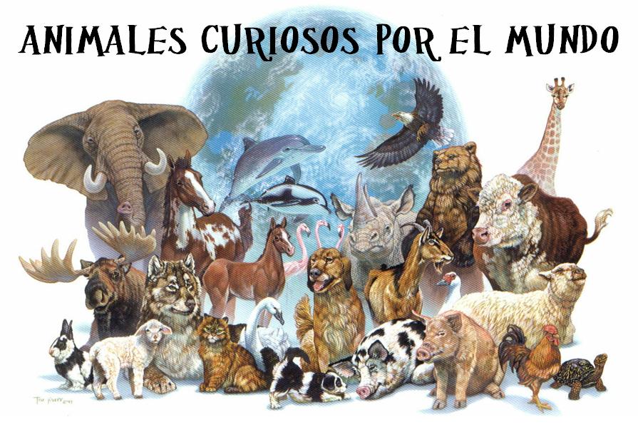 Animales curiosos por el mundo