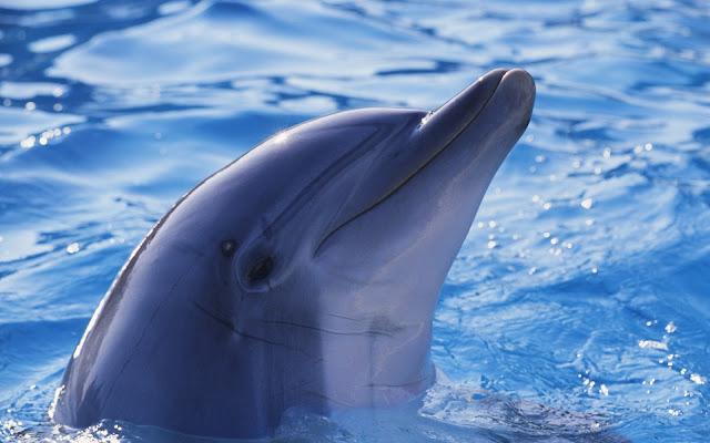 Imágenes Delfines - Fotos de Delfines