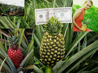 Pineapple Farming Tips For Business