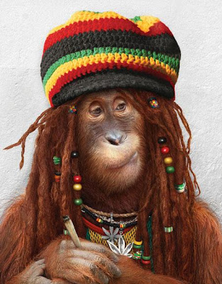 Monkey Tribal Funny Monkey Picture