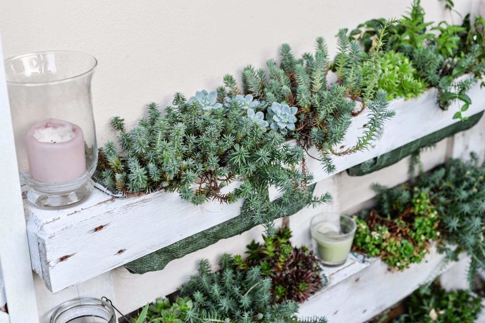 Giardinaggio piante e fiori profumati oui darling for Piante da giardino con fiori