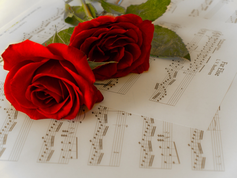 Raney Photography: Roses on top of Sheet Music