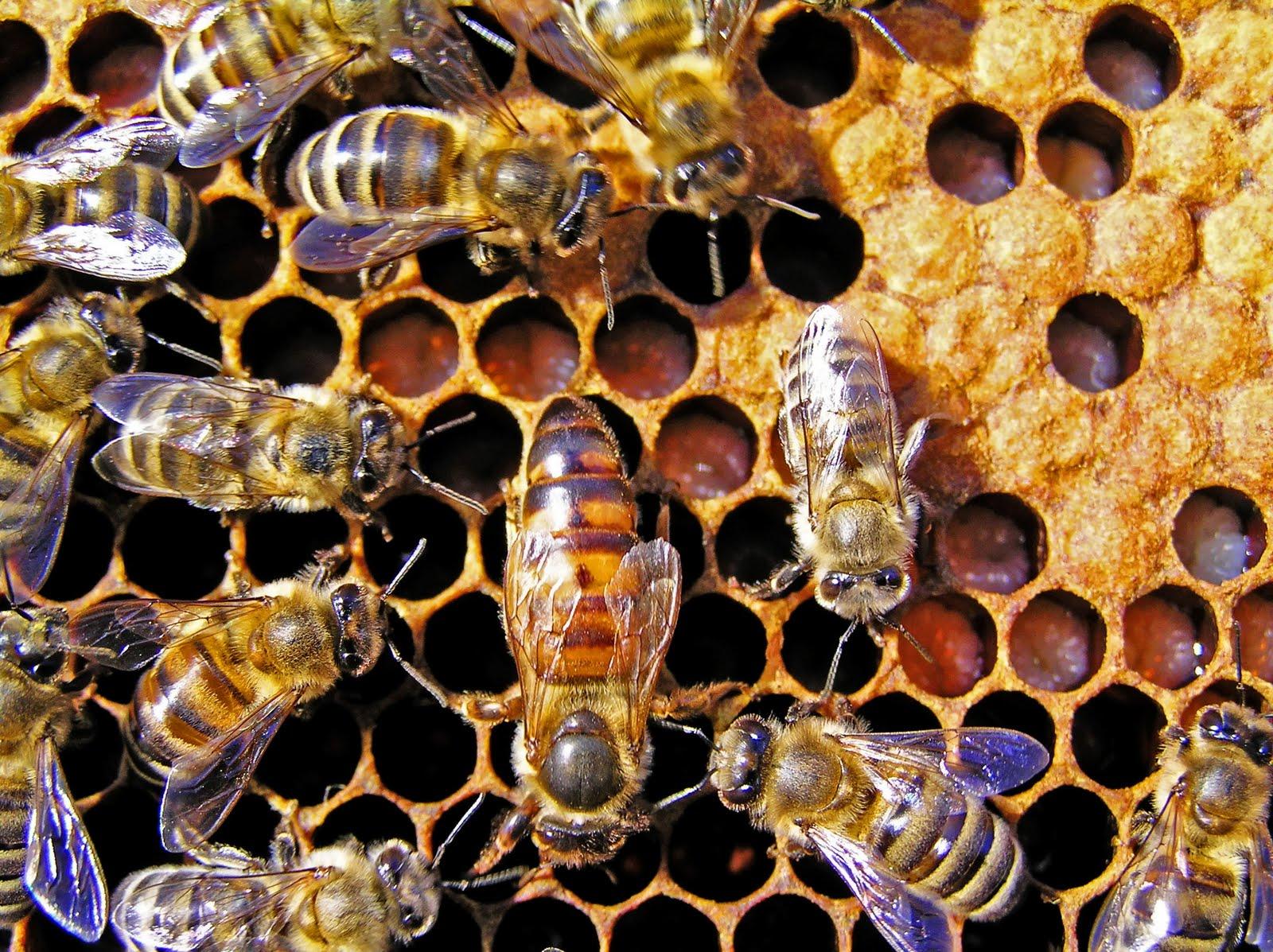 Citaten Over Bijen : Museumjeugduniversiteit kunnen wij leven zonder bijen