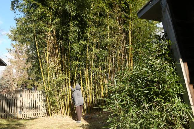 """bamboo and assam Chaygaon (assam), jun 22 (pti) assam chief minister sarbananda sonowal today inaugurated a bamboo technology park here in kamrup district with an investment of rs 6228 crore """"the northeast region accounts for 66 per cent of india's bamboo and is cultivated in homesteads, village gardens."""