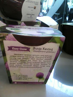 Easy Grow Kit Bunga Kancing