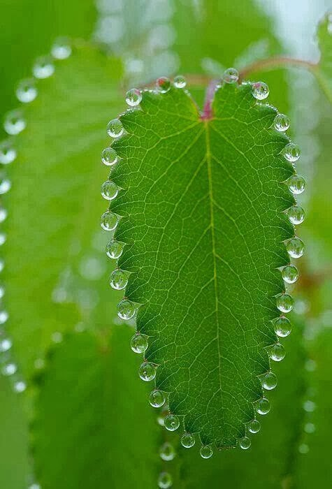 Dew drop necklace on a leaf