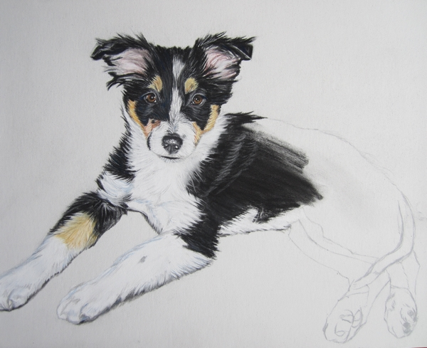 Portraits animaliers - Page 4 Chiot+pastels