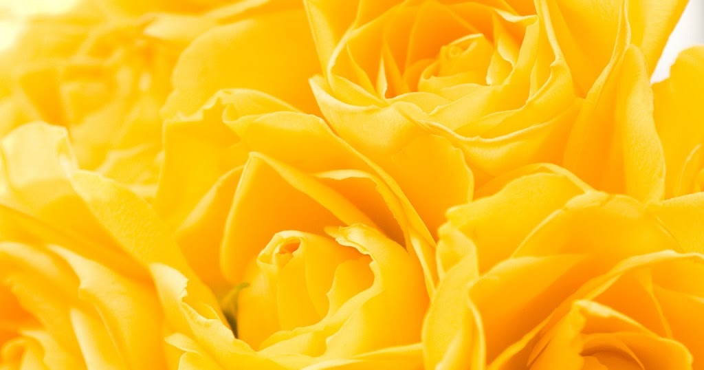 Free Wallpapers For Ipad Yellow Roses