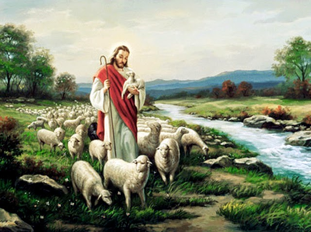 Based On Todays Gospel From John I Wanted To Learn A Bit More About Sheep And Shepherds Feel In Tune With Jesus Teaching