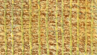 texture imitazione tessuto disegnato a cera: N14