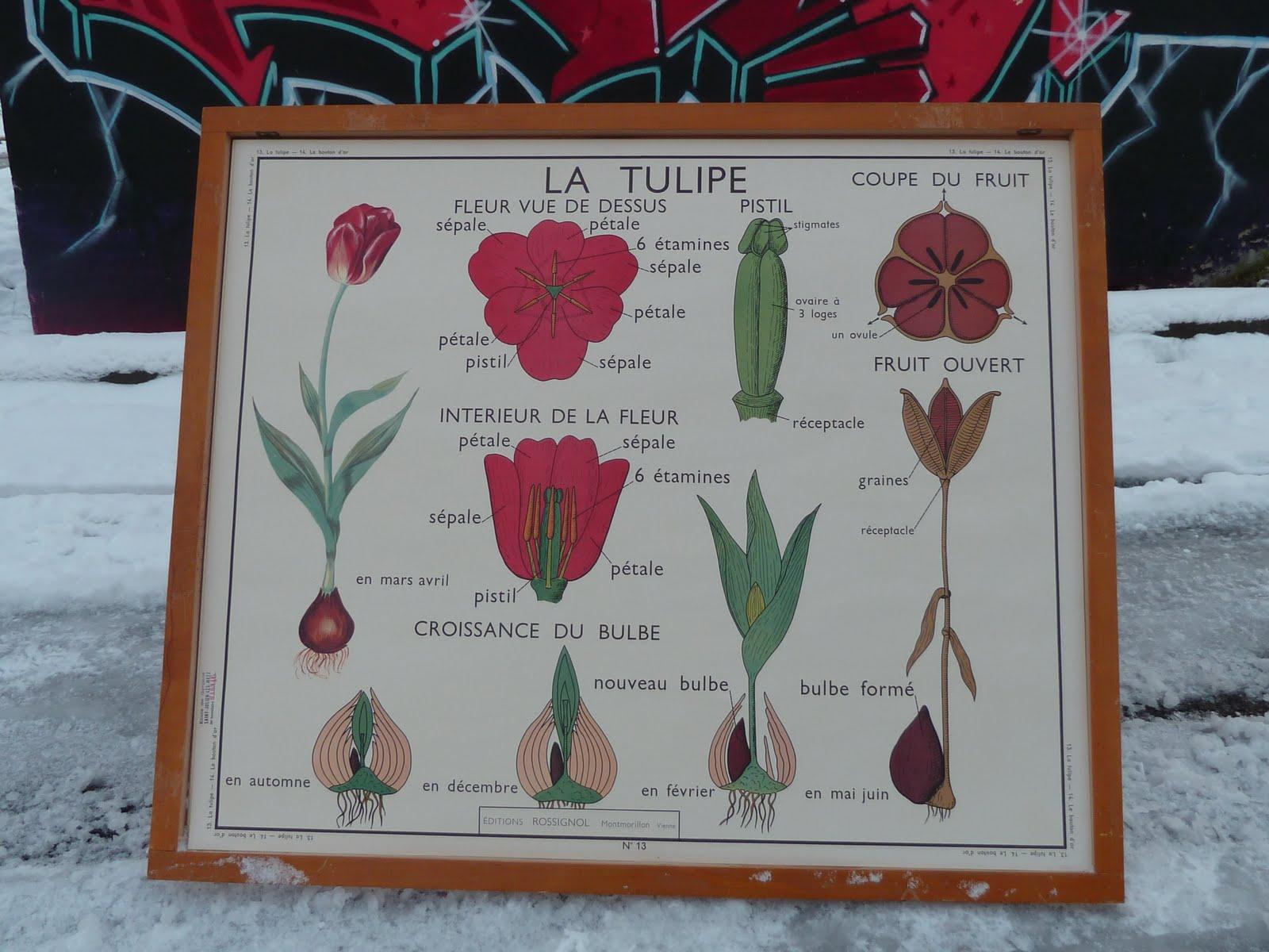 Ecole fmr 1000 affiches scolaires les plantes rossignol anciennes affiches - Vieille carte scolaire ...
