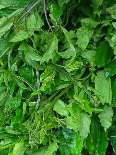Image result for images of ugu leaves