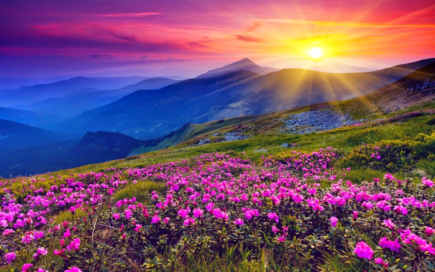 Flowers 1080p Widescreen Wallpapers
