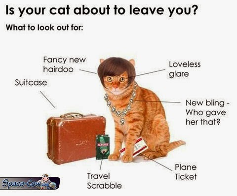 funny cat pics humor