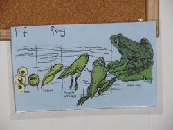 The Lifecycle of a Frog (Answers in Genesis)