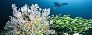 Tempat Diving dan Snorkeling Terbaik ada di Raja Ampat