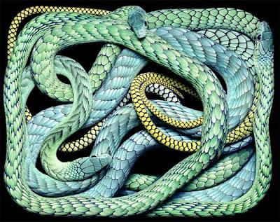 ular-berbisa