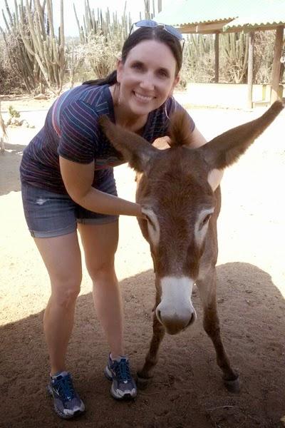 Aruba Donkey Sanctuary : I adopted a donkey in Aruba! http://kelleylynne.blogspot.com