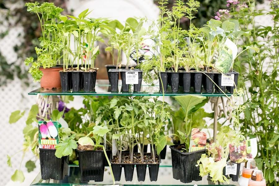 Plantones huerto urbano