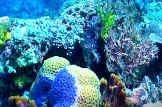 terumbu karang gili meno