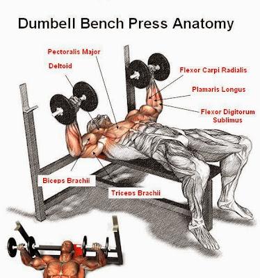 Dumbell Bench Press