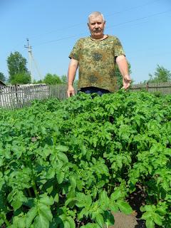 Картофель в июне