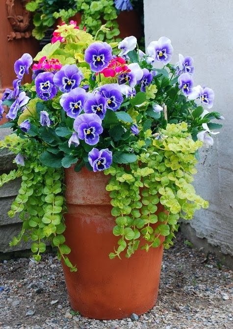 Wonderful winter garden containers for Easy plants to grow in pots outside