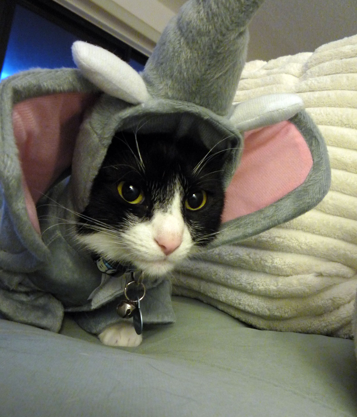 your daily cute: two cats monday: halloween costumes and happy