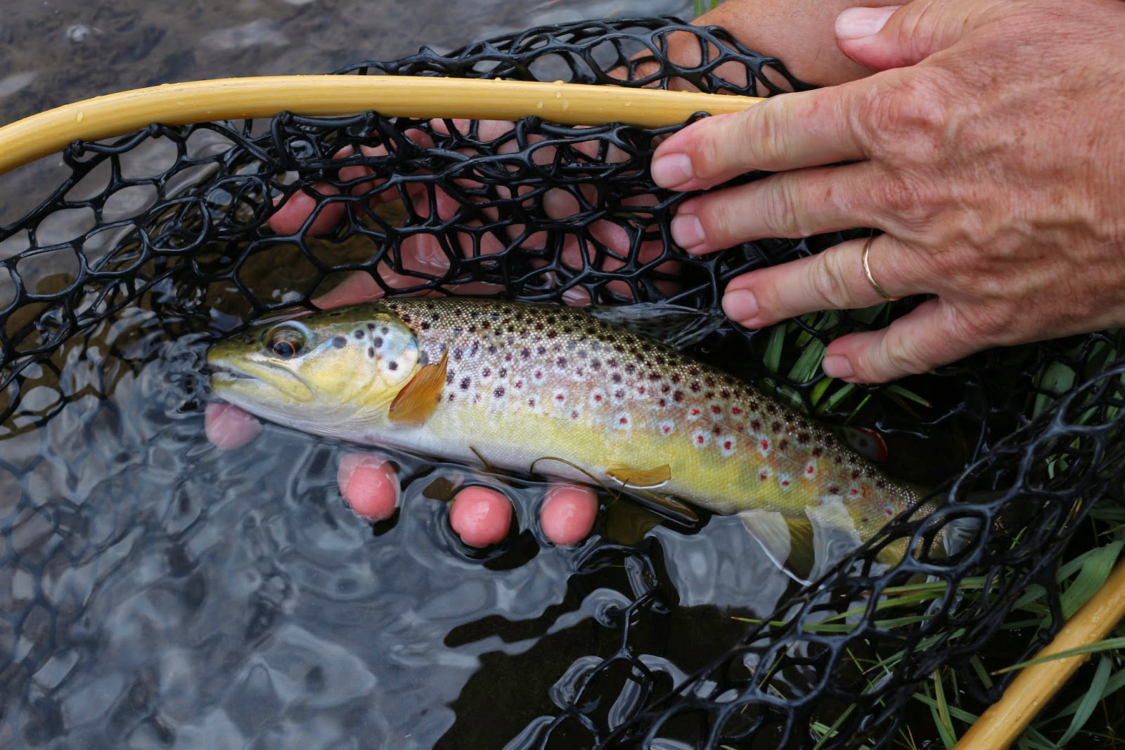 Fly+fish+the+Roaring+Fork+River+in+Colorado+with+Jay+Scott+Outdoors+14.JPG