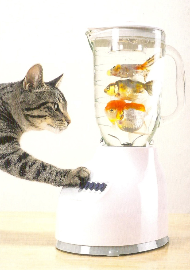 9teen87 39 s postcards september 2011 for Fish in a blender