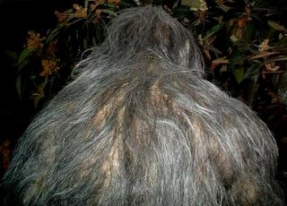 february 23 2012 the clearest photo of bigfoot since patterson gimlin