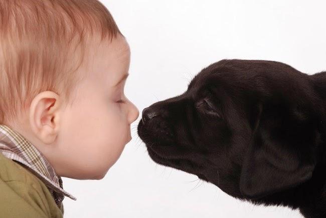 Spotkanie psa z noworodkiem
