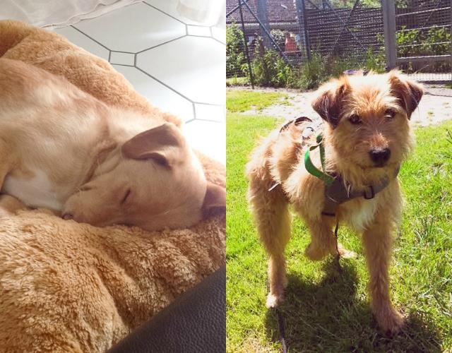 Hunde Monti und Luzie