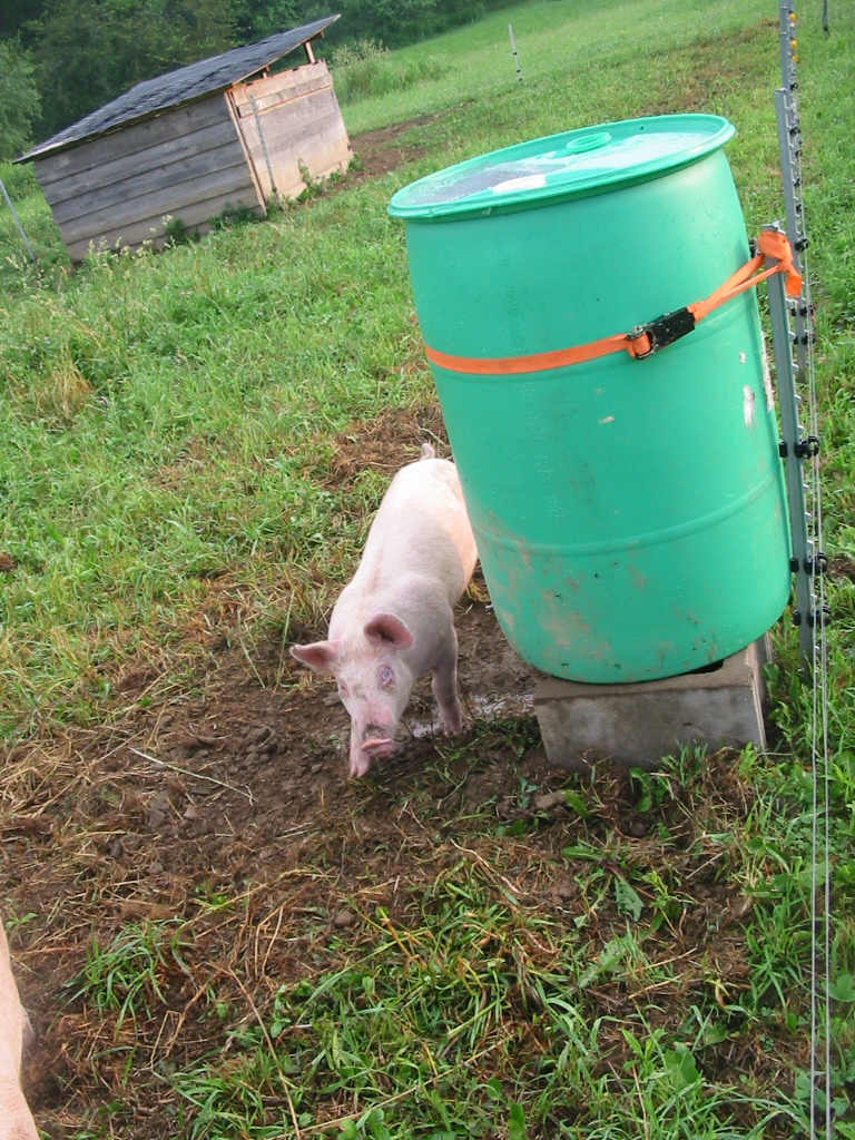 Fitzgerald S Family Farm New Pig Watering System