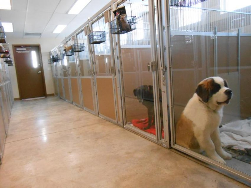 kennel boarding animals