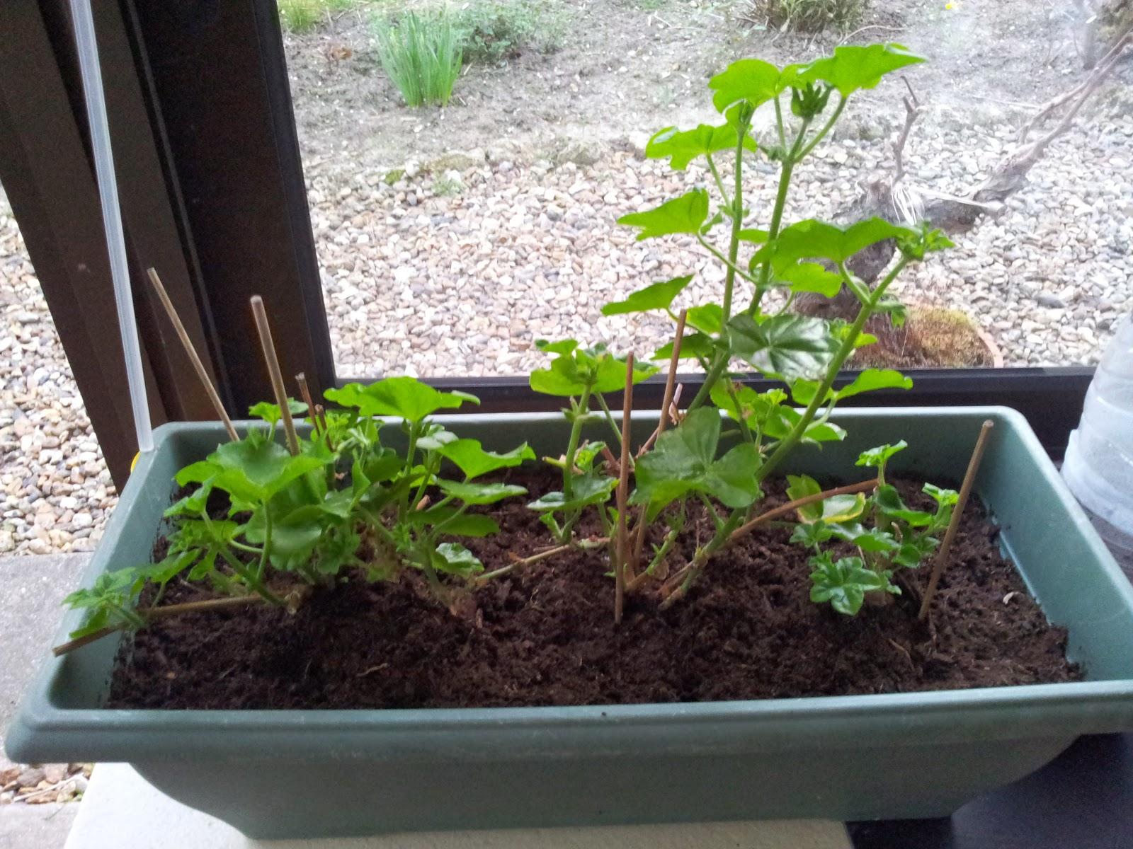 veranda kit leroy merlin 28 images revger veranda leroy merlin id 233 e inspirante pour la  # Veranda Bois En Kit Leroy Merlin