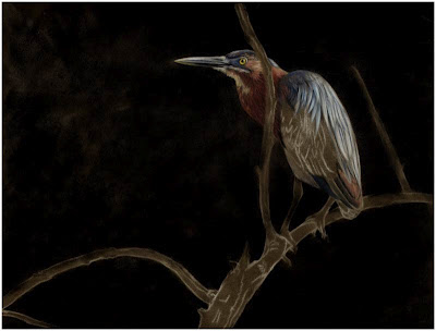 the progression of a green heron pastel painting by Colette Theriault