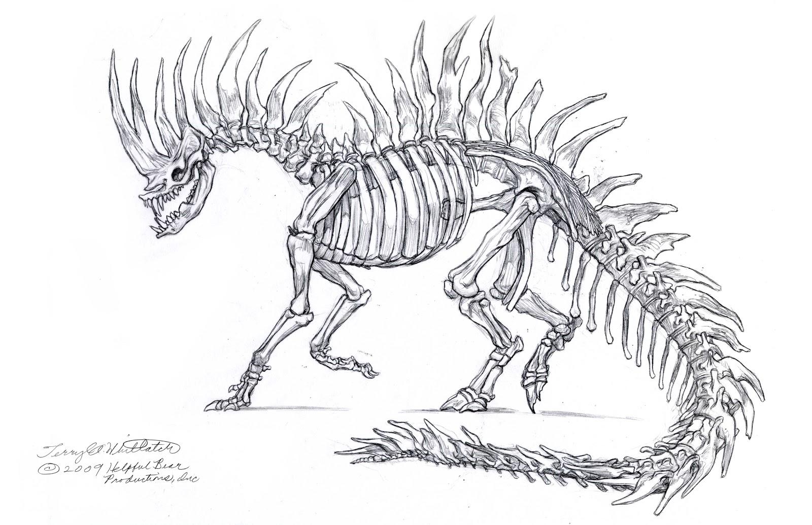 Gallery For gt Dragon Anatomy Skeleton