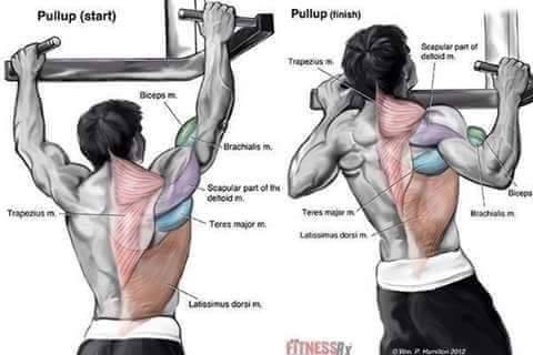 complete Bodybuilding weight training Exercises step by step instructions