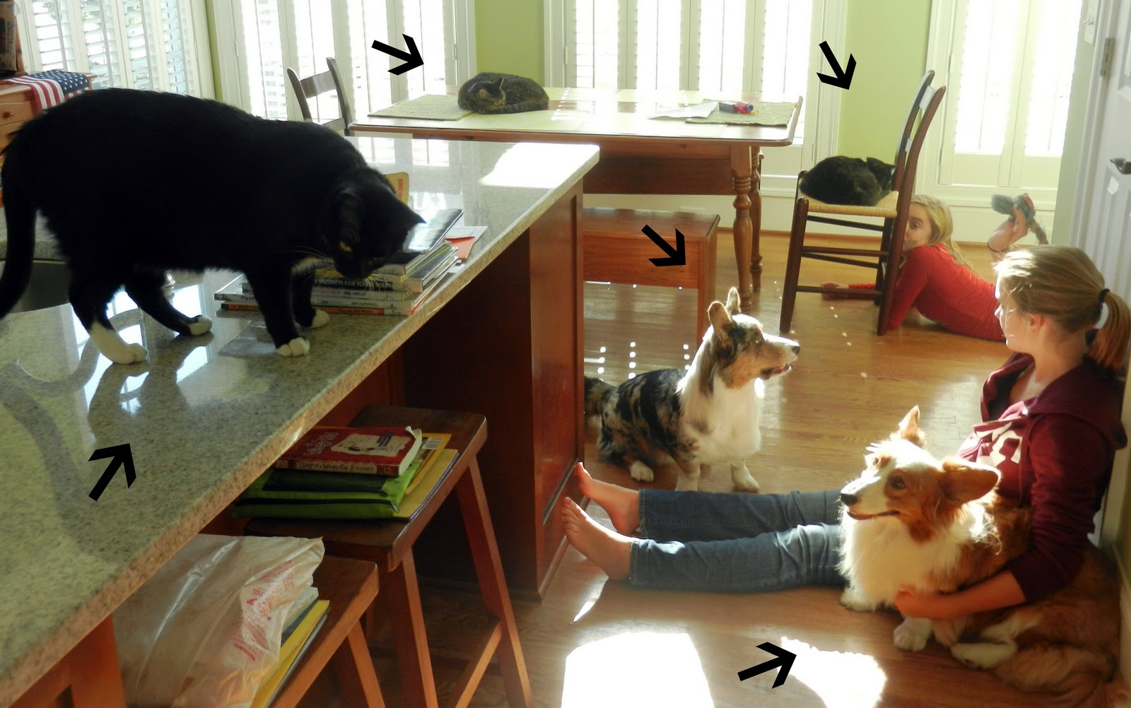 Pet Emergency Room Ames Iowa